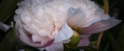 lpd_20120624-_0005295