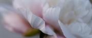 lpd_20120624-_0005379